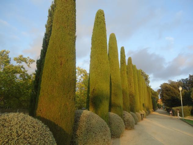 Cipreses del parque sant feliu de llobregat - Temperatura sant feliu de llobregat ...