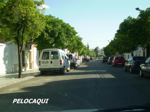 Calle general cascajo palma del rio for Calle palma del rio malaga