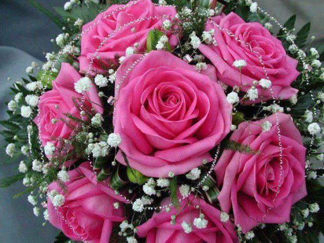 Seis bonitas rosas palanquinos - Rosas rosas hermosas ...