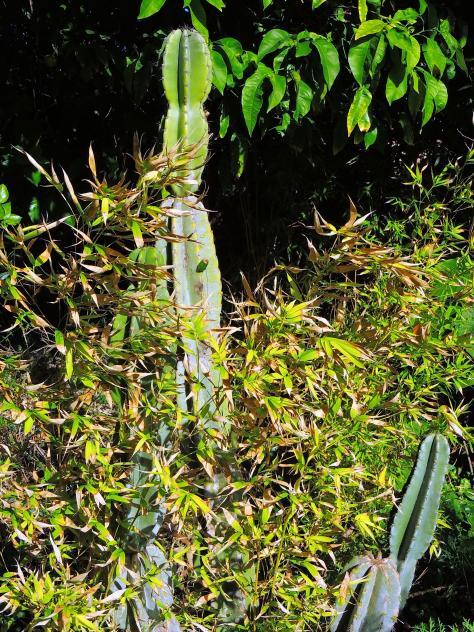 Cereus jard n bot nico san fernando for Guarderia el jardin san fernando