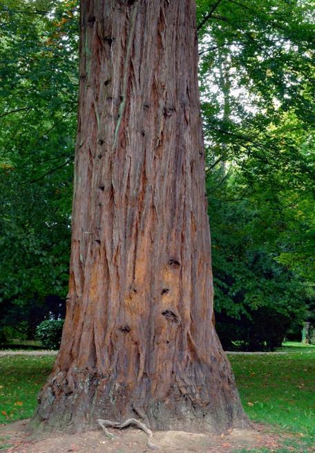 Resultado de imagen de tronco arbol