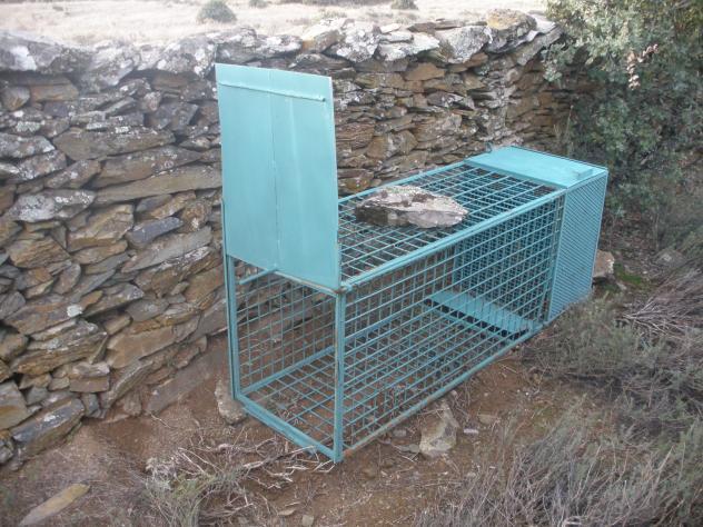 Jaula para cazar zorros y zorras membrio c ceres - Trampas para cazar ratas ...