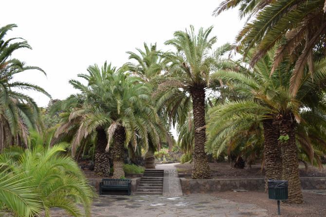 En el jard n canario las palmas de gran canaria for El jardin canario