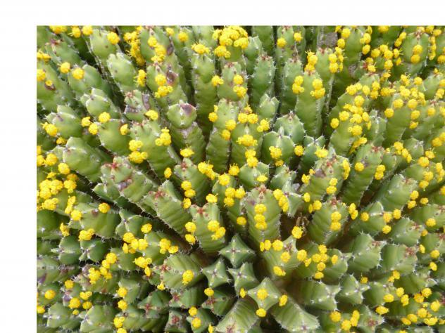 Cactus madrid for Jardin cactus madrid