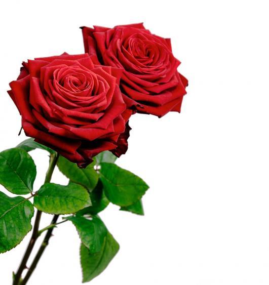 dos rosas rojas, SAN PEDRO DE MERIDA