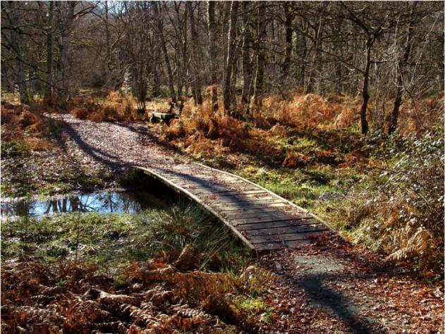 Resultado de imagen de bosque orgi