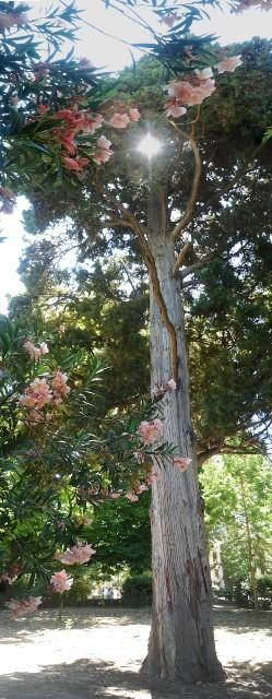 En el jard n del pr ncipe aranjuez for El jardin del principe
