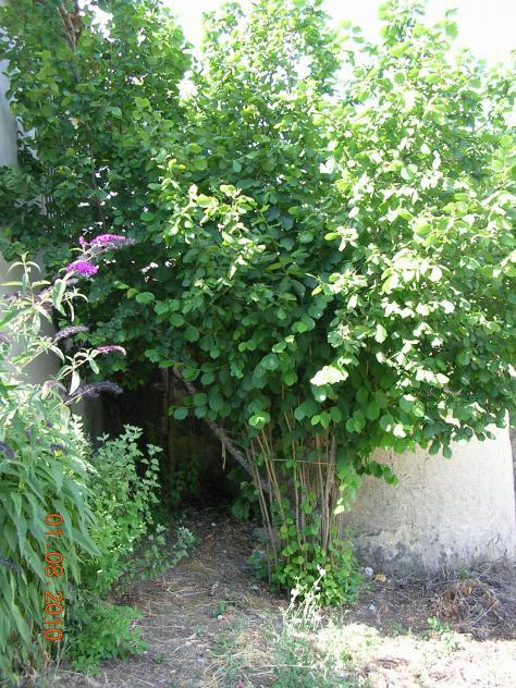 Flores de jardin arbol de azahar en el jard n bonella for Arboles y plantas de jardin