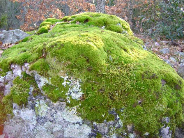 rocas y musgo la urz