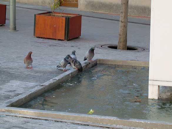 Fuente helada plaza de la vila 28 02 2005 sant feliu de - Temperatura sant feliu de llobregat ...