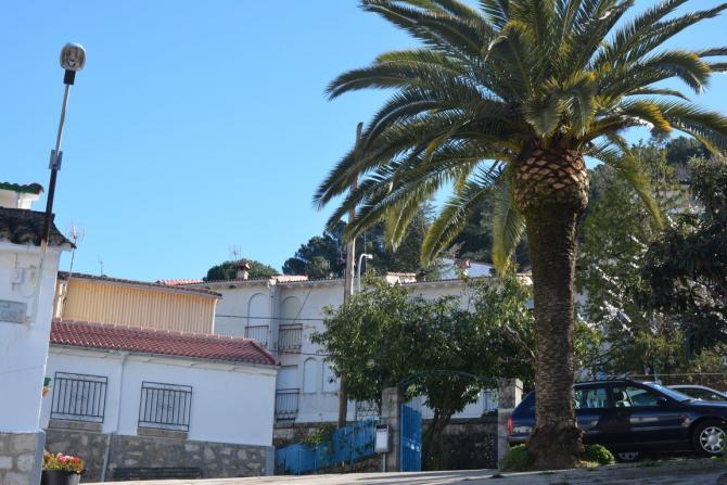 Las casas y la palmera santa cruz del valle - La casa de las palmeras ...