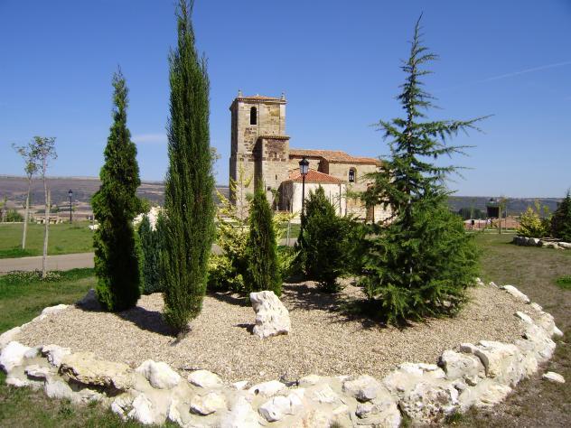 Arboles ornamentales quintanas de valdelucio for Imagenes de arboles ornamentales